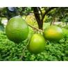Cassa di Lime 30kg