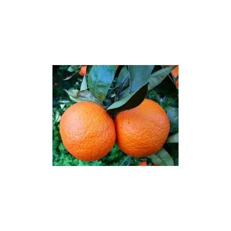 Cassa di Arance Clementine Nova 15kg