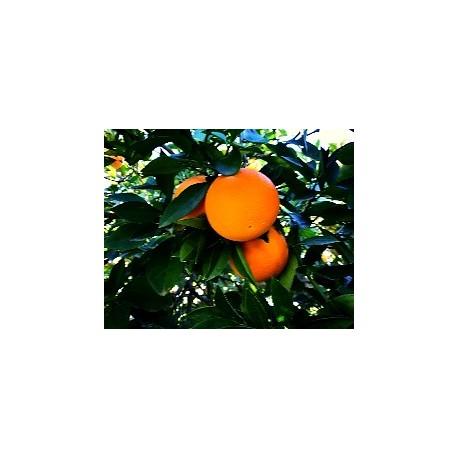 Cassa di Arancia Vaniglia 15 Kg